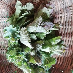 Brocolis de Choux verts